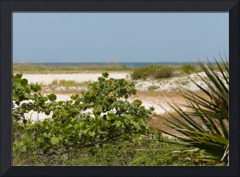 Florida Beach Landscape