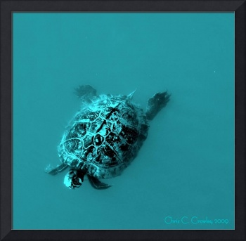 Turtle in Turquoise