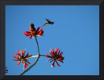 Hummingbird against sky_1448