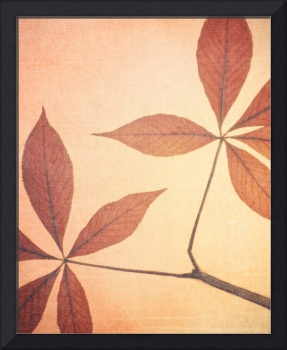 Natural Canvas Botanicals, Red