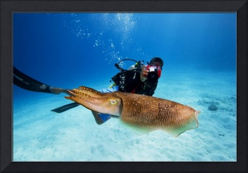 Palau, Micronesia. Diver With A Camera Swims Near