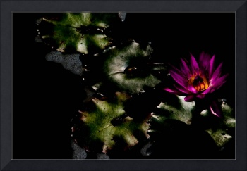 Water Lily at Dusk