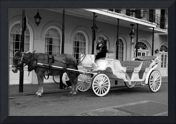New Orleans Horse Drawn Carriage Takin' a Breather