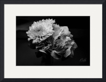 Flowers in Gray by D. Brent Walton