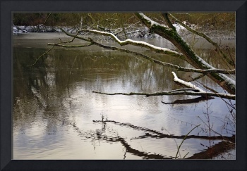 Melting Snow On Branches Over Rolleston Pond