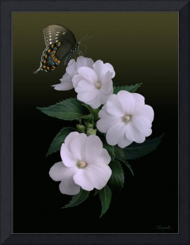 Sunpatiens and Swallowtail Butterfly