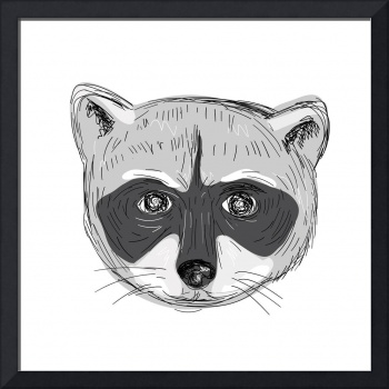 Raccoon Head Front Drawing