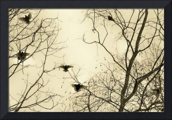 Sepia starlings in winter's cold