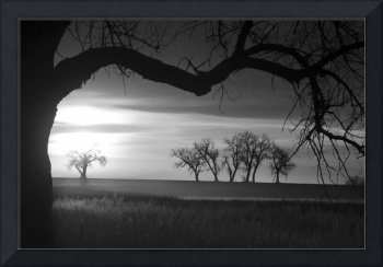 Trees and Meadows Sunrise in Black and White Photo