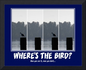 Where's the bird?