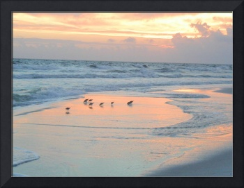 Birds on beach at sunset