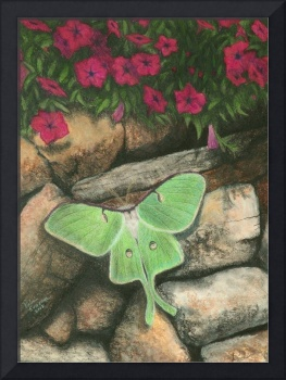 Luna Moth and Petunias