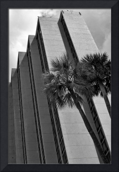 Palms and Concrete