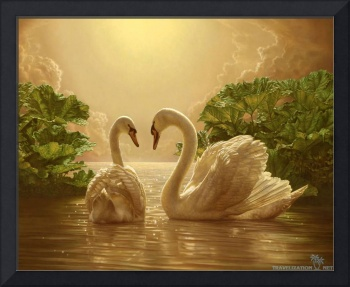 Swans On Golden Waters