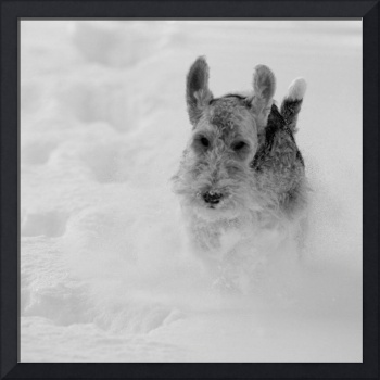 B&W Super Dog in the Snow