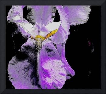Iris trough the magnificent photoshop lenses