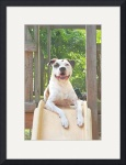 Tree House Pit Bull T-Bone by Manda Malice