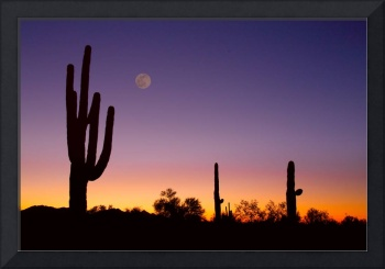 Early Morning Southwest Desert Moon Glow