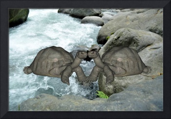 Kissing Tortoises