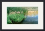 Marsh Reflections by Jacque Alameddine