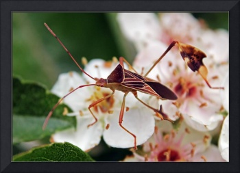 Insect on a plant
