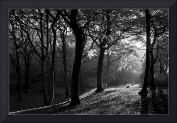 The Light Clearing (B/W)