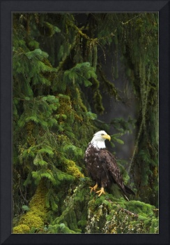 Eagle In The Woods