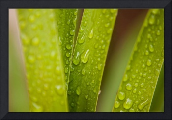Image ID# Whalen-080224-1213 - Water Drop Leaves O