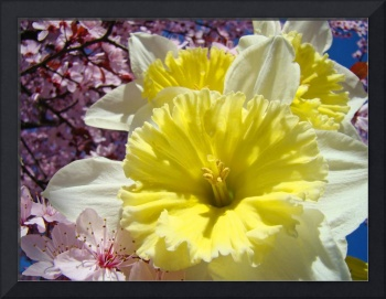 Daffodil Flowers Floral art prints Spring Blossoms