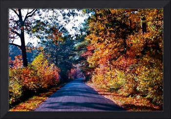 Road-with-Fall-Leaves-in-Maryland