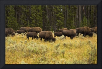 Hungry Herds