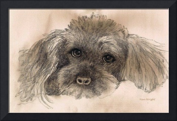 Sketch of Poodle