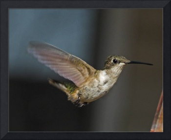 Hummingbird Wings