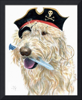 Pirate Labradoodle cream