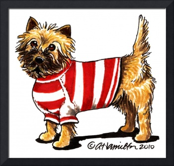 Sporty Cairn Terrier