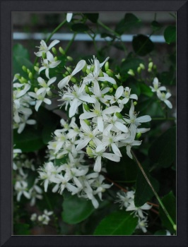 Night Jasmine, summer scents