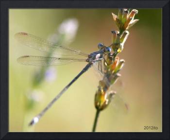Dragonfly sideview