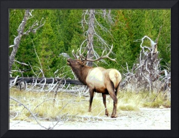 poster of male elk