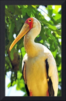 Asian Stork on Tree