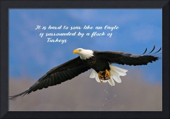 Soar Like an Eagle, If you Can