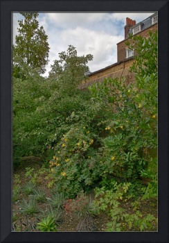 In the Physic Garden, Chelsea 30