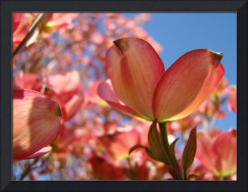 OFFICE ART PRINTS Dogwood Pink Flowers Baslee