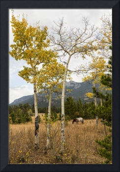 Beautiful Horse Autumn Aspen Trees Grove Grazing