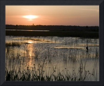 Sunset in the Wetlands