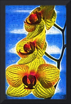Three Yellow Orchid Blooms
