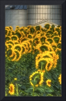 Sunflowers and Silo