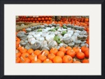 Pumpkins of Many Colors by Jacque Alameddine