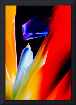 Bird of Paradise, Edit H2