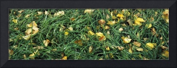 Green grass with yellow leaves
