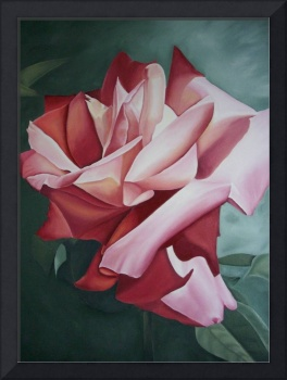 Red Rose Light And Shadows Painting